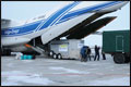 Bizons worden voor fokprogramma per vliegtuig naar Rusland vervoerd[+foto]