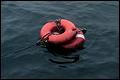 Opvarende van Nederlands schip 'Wylde Swan' vermist