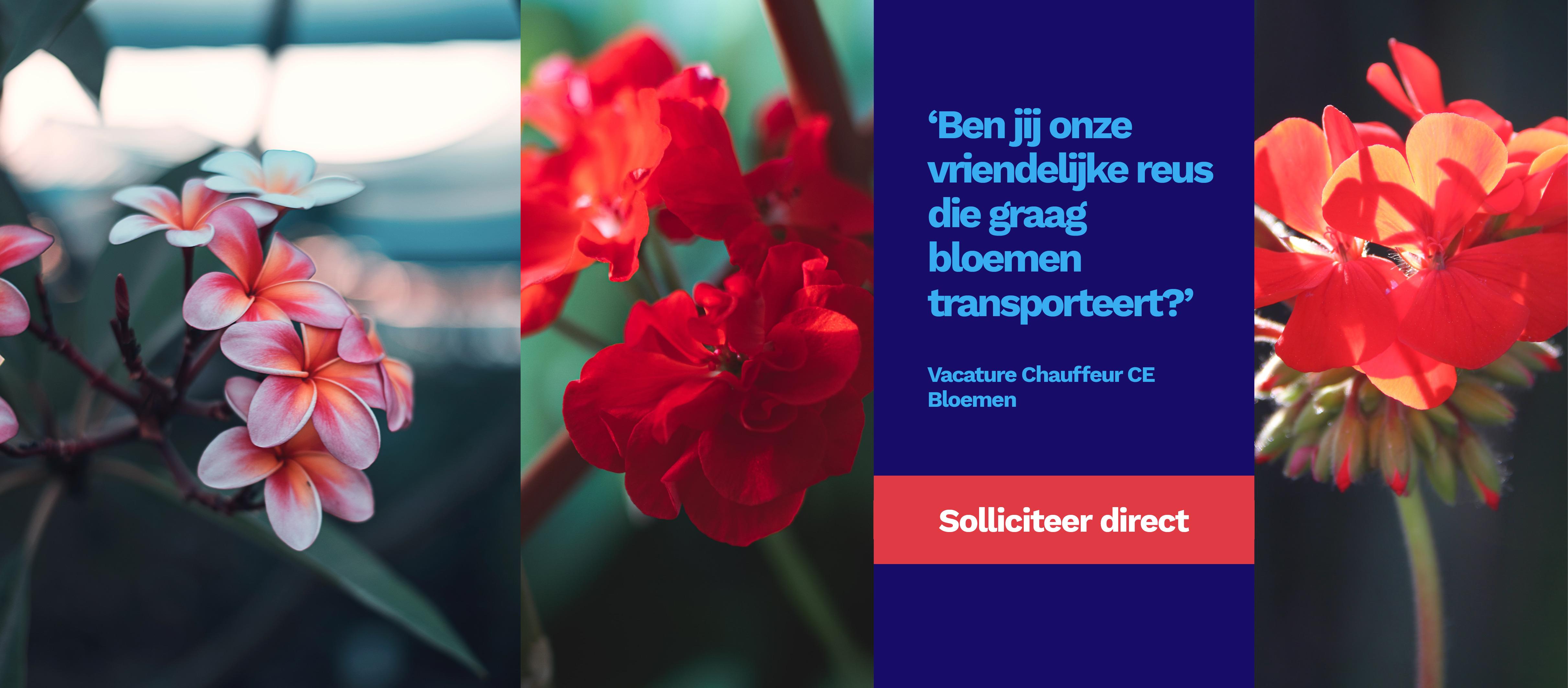 Chauffeur Nationaal Bloemen Mijdrecht